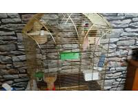 Finch for sale