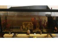 Aquarium with golden fish