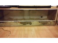 2 corn snakes and 4ft viv for sale