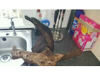 Change of plans forces sale 2 large pieces of bogwood