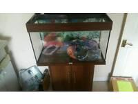 juwel rio aquarium tank and stand