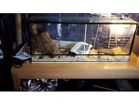 large vivarium with 2 cornsnakes
