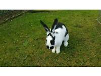 Rehoming rabbits