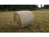 Large hay bales, around 50-60