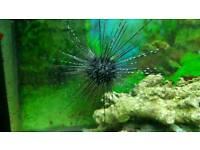 Juwel 260 Marine Aquarium