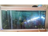 Beautiful 5ft fish tank