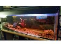 6ft aquarium fish tank