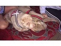 Loving doggie day care crèche
