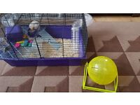 Hamster Cage and Running Ball with accessories