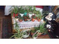 Plants healthy organic in beautiful pots, Aloe Vera, succulent cactus, spider plant, easy to grow