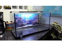 Gold Fish Tank / Aquarium