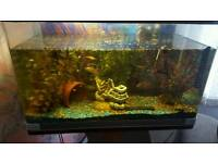 Tropical fish tank and stand for sale