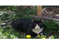 Missing family cat, VERY HIGH SENTIMENTAL VALUE