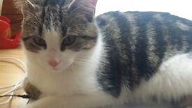 Lovely & Sweet Cat