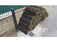 40 x Turf Roll (price per square metre)