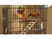 Parrot + Cage