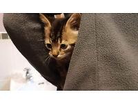 Kitten free go home