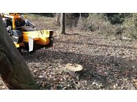Saffron Walden Tree Stump Grinding And Tree Root Removal