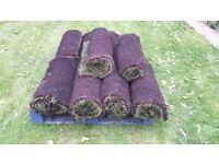 turf 9.5 m sq. - 10 rolls