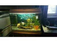 94L Juwel Freshwater Aquarium