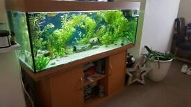 5 ft tropical fish tank set up