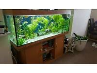 5 ft tropical fish tank set up