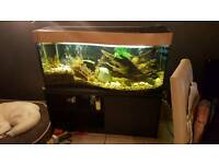 P shaped 4ft aquarium