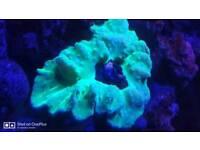 Marine several corals