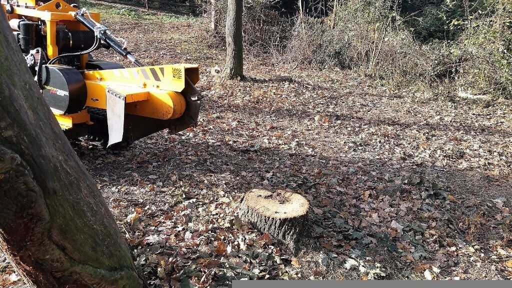 Es And Suffolk Tree Stump Grinding Root Removal