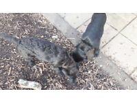 2 x terrier Mix pups.