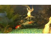 Goldfish tank and equipment.