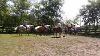 Horse Day Camps and Trail Rides