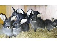 7 beautiful rabbits