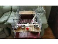 very good condition hamster or rabbits ferrets guinea pigs or any small pets