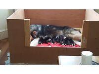Whelping box and puppy feeding bowl