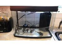 Fish tank with heater and filter