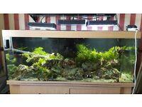 5 ft x 2ft x2ft marien fish tank