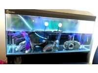 Turtle tank fully equipped heater and filter