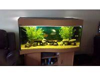 Ehiem 4ft Aquarium(complete set-up)