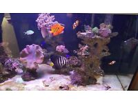 Marine fish tank and fish plus rocks and corals for sale as good as new with loads of extras