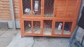 Double rabbit hutch and separate run