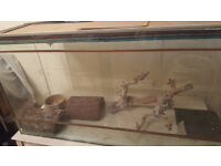 Glass vivarium, with accessories