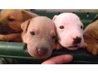 9 beautiful pups