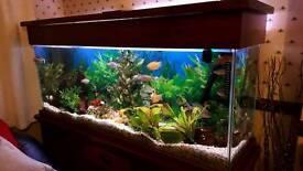 5.5ft Fish Tank