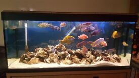 Fluval 250 litre fish tank and cabinet and complete setup