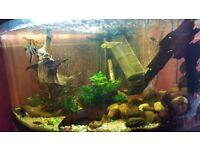 Tropical fish tank Juwel Trigon 190