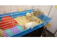 2 female guinea pigs with cage and LOTS of supplies