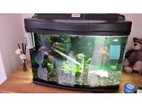 fish tank complete with 4 tropical fish & accessories
