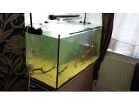 fish tank four foot
