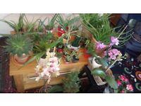 Plants healthy organic in beautiful pots, Aloe Vera, succulent cactus, spider plant